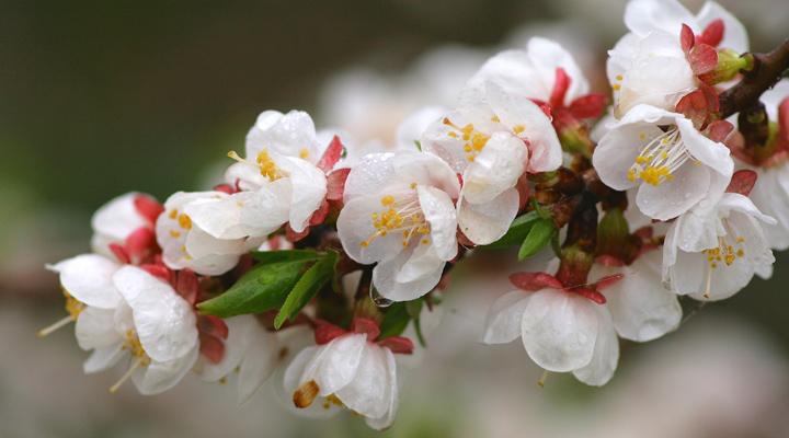 Тройные картинки про весну