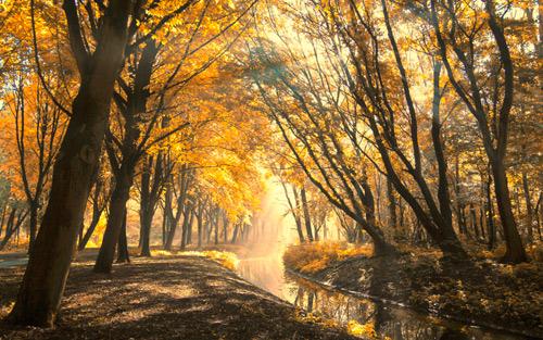 осень лес природа парк