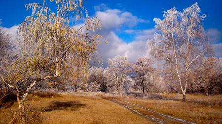 снег обои зима