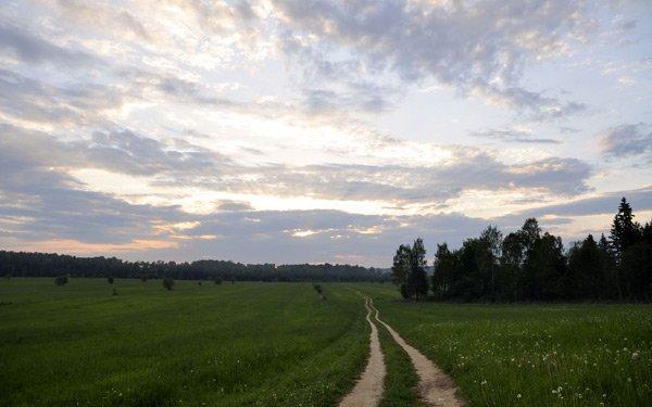 летние поля зелень обои