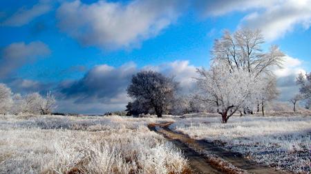 обои иней снег зима