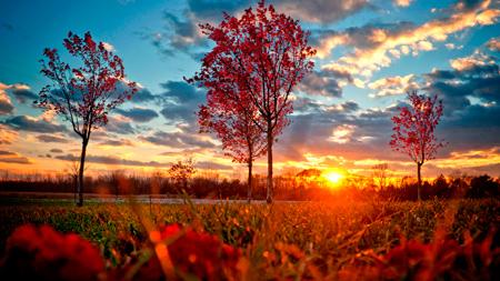 осень обои фото красивые