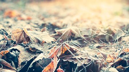 снег иней зима