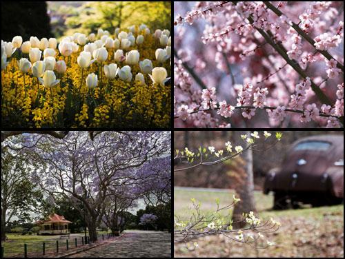 обои весна бесплатно