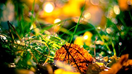 осень обои фото солнечная