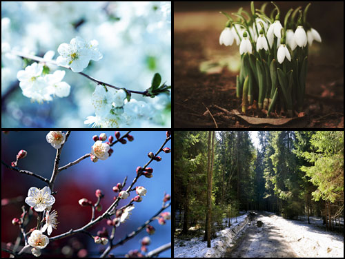 обои весна скачать