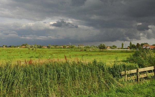 летние поля обои фото
