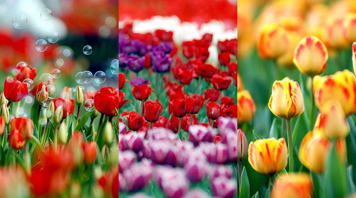 samsung s5230 тройные весна