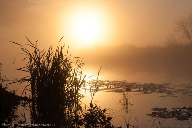 восход в тумане на реке летом
