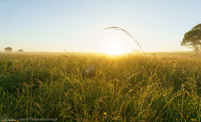 трава в росе утром