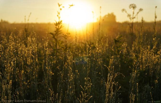 роса на хвоще полевом