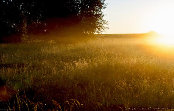 природа в тумане на рассвете