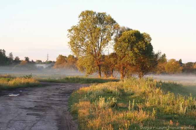 туманное утро летом