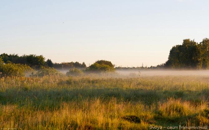 поле в тумане