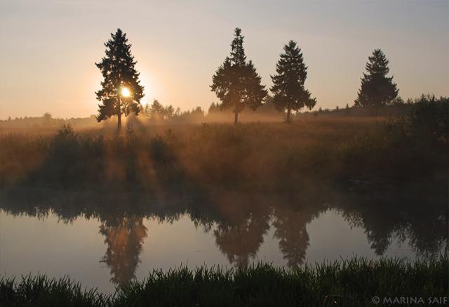 Раннее утро. Фотограф Марина Сайф