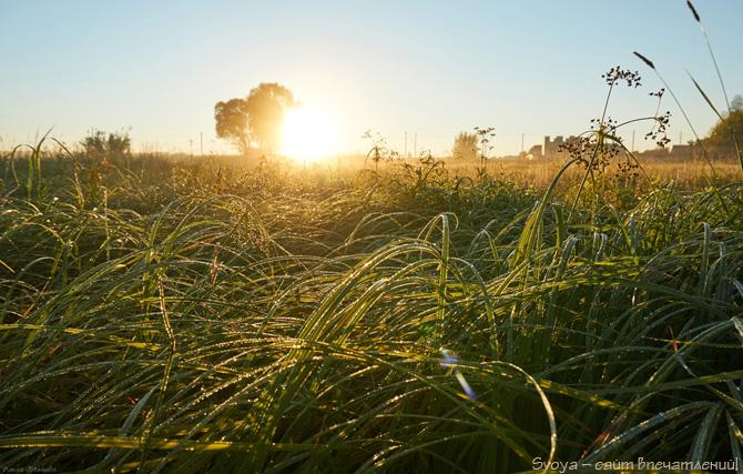 трава в росе на восходе