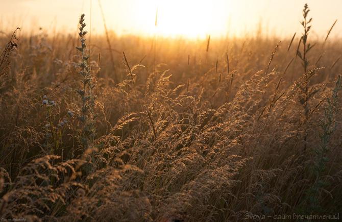 летние травы в росе