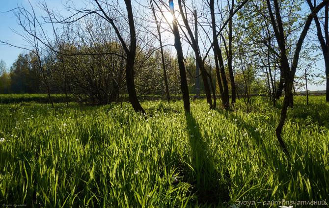 трава на солнце утром