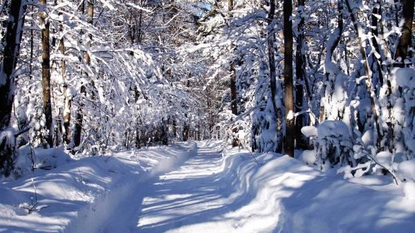 Обои 1600х1200 обои зима hd 2015 зимние обои
