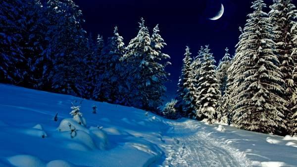 В лесу обои зима hd 2015 зимние обои