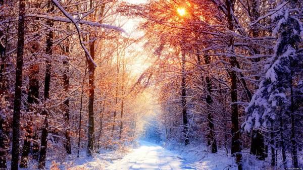 В лесу hd 1920x1080 обои зима hd 2015 зимние