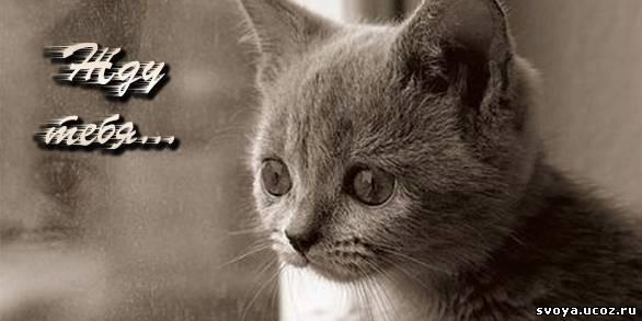 Черно белый грустный котенок и