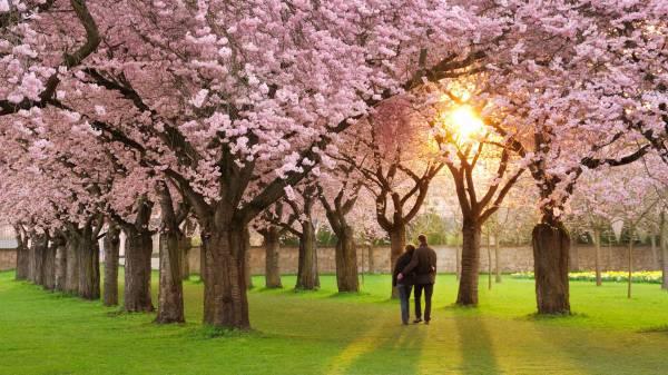 Картинки влюбленных весной