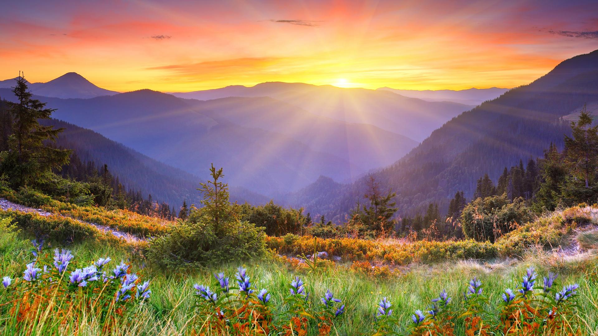 Поле с цветами на закате для