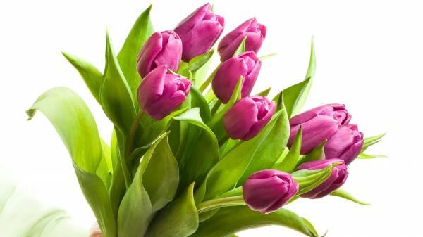 Картинки красивые с 8 марта большое разрешение
