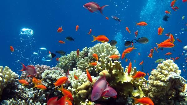 Рыбы под водой