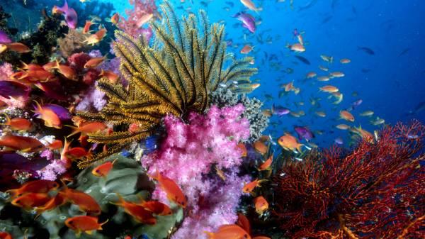 Красота подводного рифа