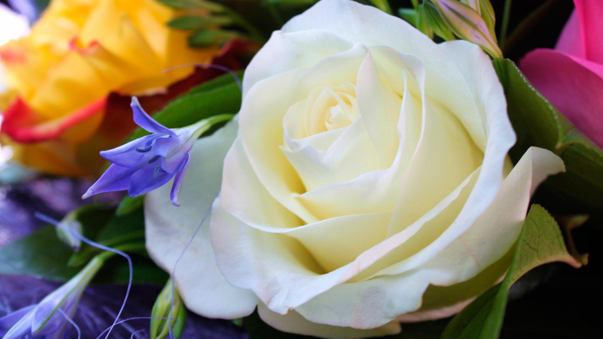 Открытка с днем рождения с розами белыми 25