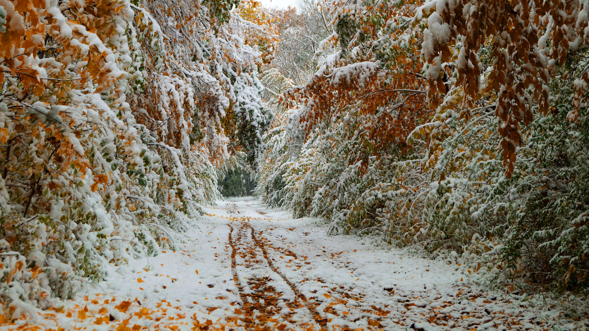 осень первый снег обои рабочего стола № 636993  скачать