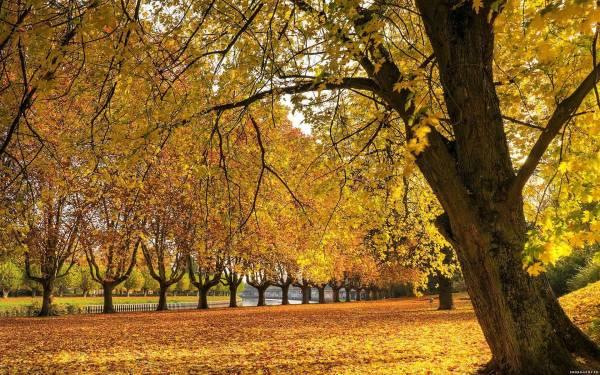 Осень в парке 1920х1080 обои осень