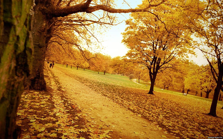 Осенний сад обои 1440x900