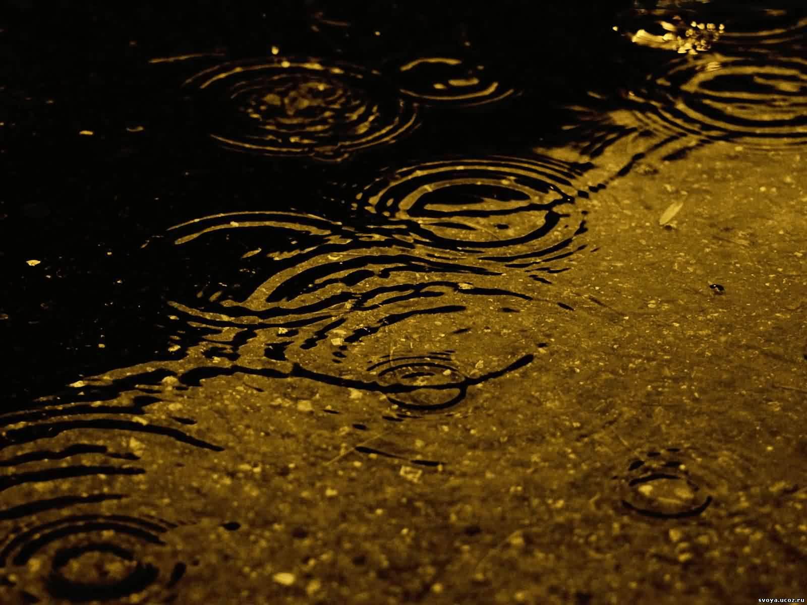 Rain фото